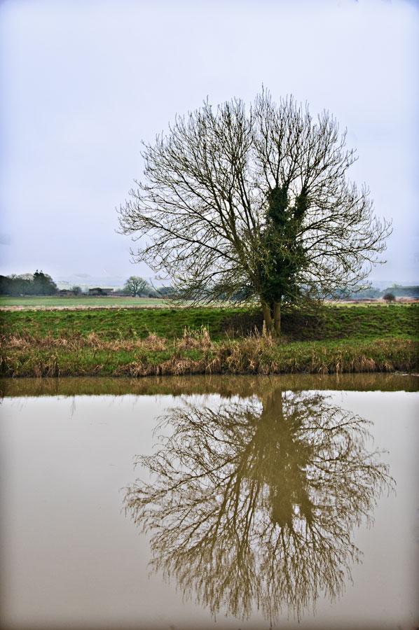 Tree on the Arun Riverbank